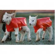 Bárányvédő takaró 25 db/csomag
